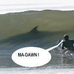!!!!!!!!!!!!!!!!!!!surfing_shark_scare