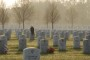 Bald Eagle on Soldier's Grave -- Facebook HOAX