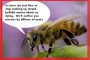 The Dead Honeybee Hoax.  All This Buzz About NOTHING!