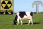 Radiation Spreads To Farms.  Milk Contaminated