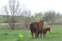 ARE THEY KILLING BABY HORSES IN ONTARIO, CANADA?