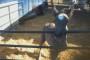 Cruelty To Horses - Killing Newborn Foals In Ontario?